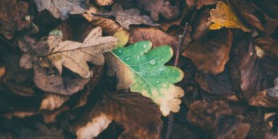 Image: Free-Photos, Leaves oak fallen, Pixabay, Pixabay Licence