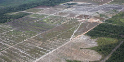 Photo: Glenn Hurowitz, Flickr, deforestation for oil palm, creative commons license 2.0