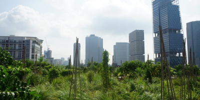 Image: Monika Rut, Raffles City, a rooftop garden maintained by Edible Garden City Singapore
