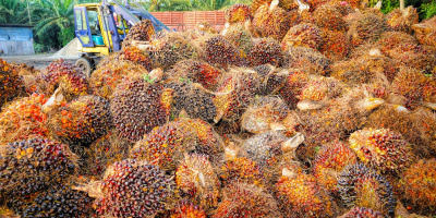 Image: Tristantan, Palm oil fruit, Pixabay, Creative Commons CC0