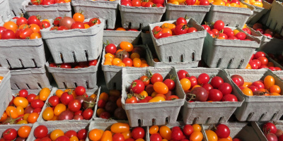 Image: Ruth Hartnup, Heirloom cherry tomatoes at Wholefoods, Flickr, Creative Commons Attribution 2.0 Generic