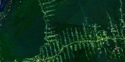 Image: NASA, Deforestation in Amazonia, seen from satellite, Wikimedia Commons, Public Domain