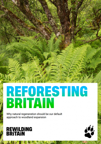 Reforesting Britain report cover